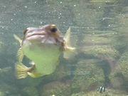 Mira dibujos animados gratis Bristol Zoo Aquarium