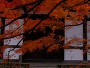 Watch free video Autumn-Wonderland-Tōfuku-ji-Kyoto