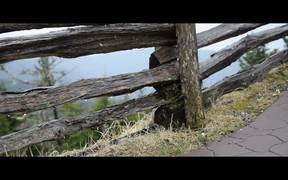 Watch free video Road Trip Maryland - Washington