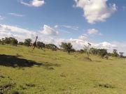 Mira dibujos animados gratis Giraffe Ride - First real day in Kenya