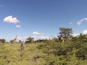 Watch free video Giraffe Ride - First real day in Kenya