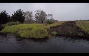 Watch free video Dogs Day Out - a Rainy Day at the Creek..