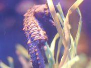 Cute Little Seahorse