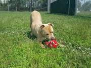 Watch free video Marvel & Her Toy