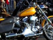 "Watch free video ""We Love Harley Davidson"""