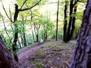 Watch free video World Champion Ondrej Cink & Autumn Prygl Trail