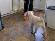 Watch free video Lab Puppy Having Fun