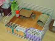 Watch free video Guinea Pig Mocha's Diary 30/10/11