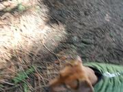 Watch free video Walking With My Puppy