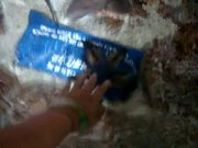 Watch free video Petting Starfish
