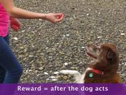 Watch free video Positive Reinforcement