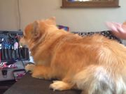 Watch free video The Dog Becomes A Lion
