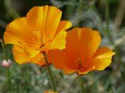 Couple of Beautiful Flowers