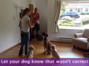 Watch free video How To Teach A Dog To Stay - Not Listening