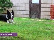 Watch free video How To Teach A Dog To Stay - Advanced