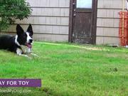 Mira dibujos animados gratis How To Teach A Dog To Stay - Advanced