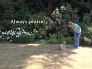 Watch free video How To Teach A Dog To Come - Part 2