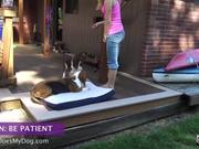 Watch free video How To Teach A Dog To Lay Down - Be Patient