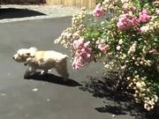 Watch free video How To Teach A Dog To Come - Part 3