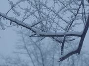 Watch free video The first snow of winter