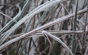 Watch free video Instants D'Hiver - Winter moments