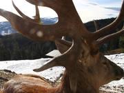 Watch free video Pelziges im Winter