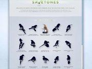 Watch free video Save Brasil Video: Birds