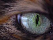 Mira dibujos animados gratis Spellbinding Cat Eye - Extreme Close Up