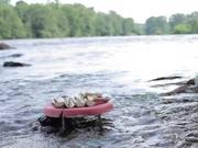 Watch free video Nature Inspired Food - Katja Gruijters