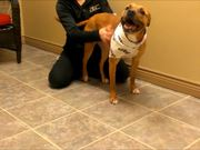 Watch free video Adorable Adoptables at HBCP