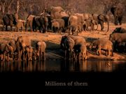 Watch free video Elephants Forever - Call To Action