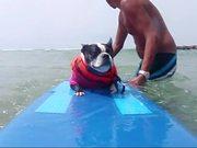 Watch free video Surf Dog