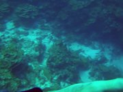 Watch free video Karpata Reef - Bonaire