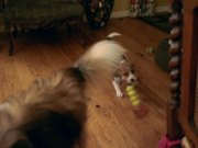 Watch free video Sagan and Halley Play Tug