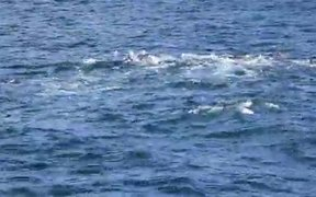 Watch free video Dolphintopia. Amazing Dolphins