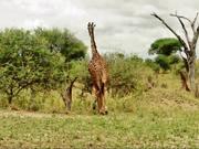 Watch free video Short Film About Tanzania
