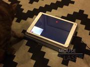 Watch free video Cat Selfie