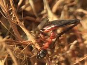Watch free video Ant Macro