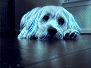 Watch free video Sparky Meets Prisma