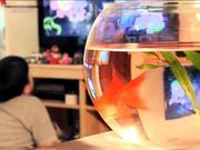 Watch free video Cartoon Network - Dancing Goldfish