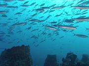 Watch free video Martinique Diving