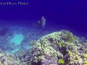 Mira dibujos animados gratis Extreme Underwater Test