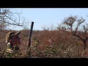 Watch free video Dove Hunt Argentina