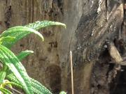 Watch free video The Tiny Ants