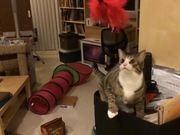 Mira dibujos animados gratis Slow-Mo Cats
