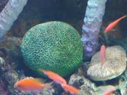 Mira dibujos animados gratis Green Coral and Fishes
