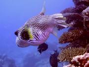 Mira dibujos animados gratis Great Barrier Reef