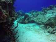 Watch free video Cozumel Diving 2016