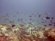 Watch free video Diving in Watamu