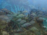Watch free video SeaLife Reel